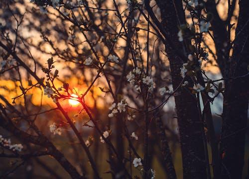 Základová fotografie zdarma na téma barva, dřevo, krajina, květ