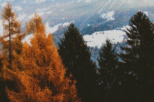 Бесплатное стоковое фото с HD-обои, гора, деревья, живописный
