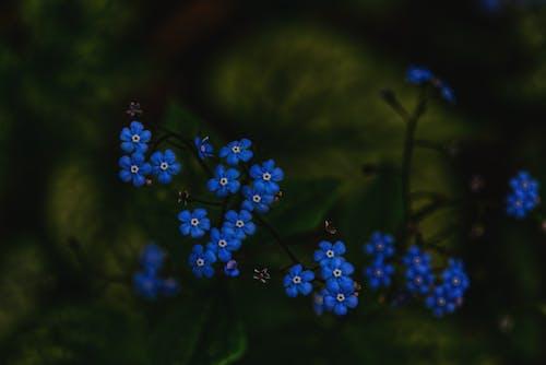 Blue Flowers in Tilt Shift Lens