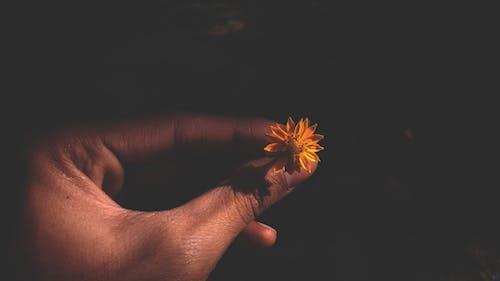 çiçek, Çiçek aranjmanı, çiçekli duvar kağıdı, cilt içeren Ücretsiz stok fotoğraf