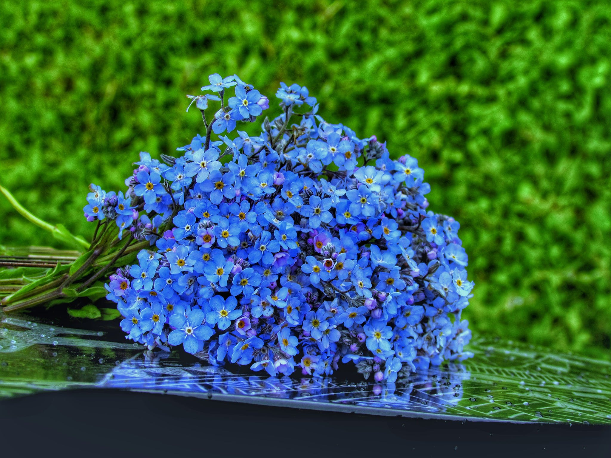 Free stock photo of blue, flower, flower wallpaper, forget me not