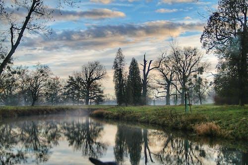 Kostnadsfri bild av dagsljus, dimmig, gräs, himmel