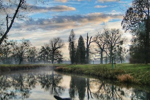 Landscape of River Forest