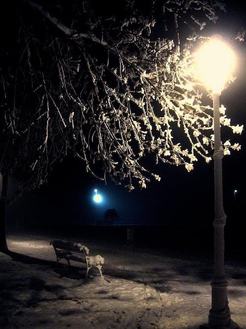 Gratis arkivbilde med lys, nattfotografi, nattlys, snø
