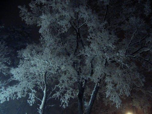 Gratis arkivbilde med bypark, snø, snødekt, trær