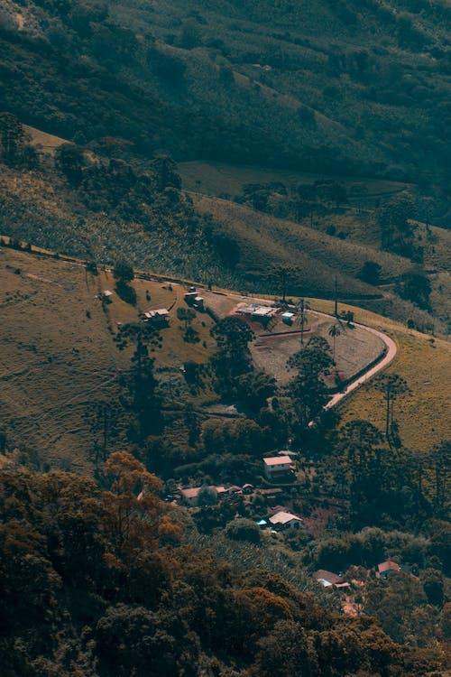 Foto d'estoc gratuïta de arbres, camp, camps de cultiu, carretera