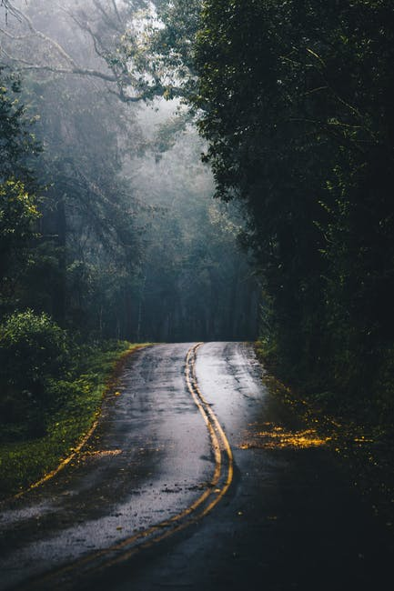 Photo of Gray Concrete Road in the Middle of Jungle during Daylight