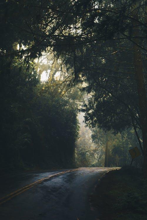 Immagine gratuita di alba, alberi, ambiente, curva