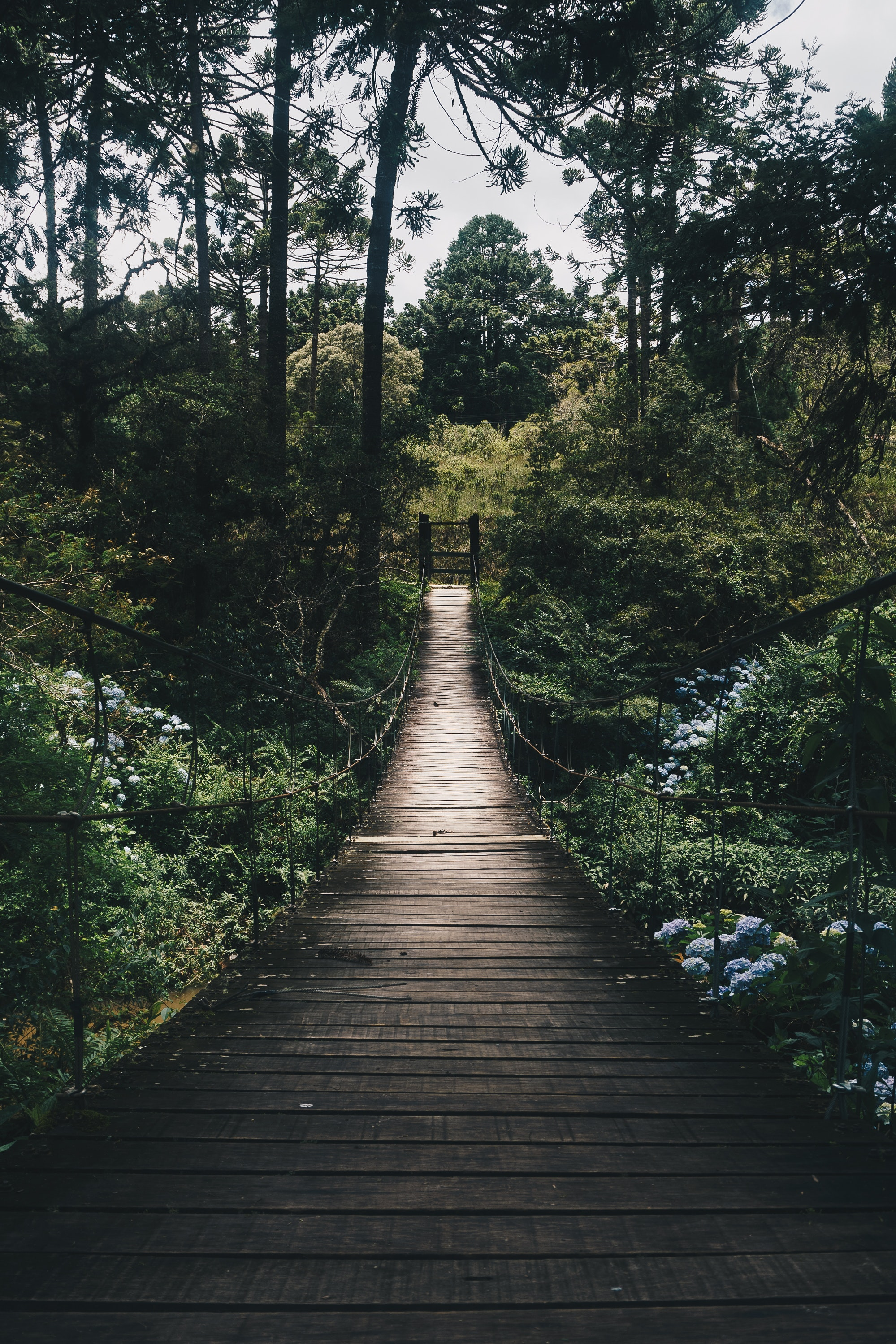 Forest Pictures Pexels Free Stock Photos