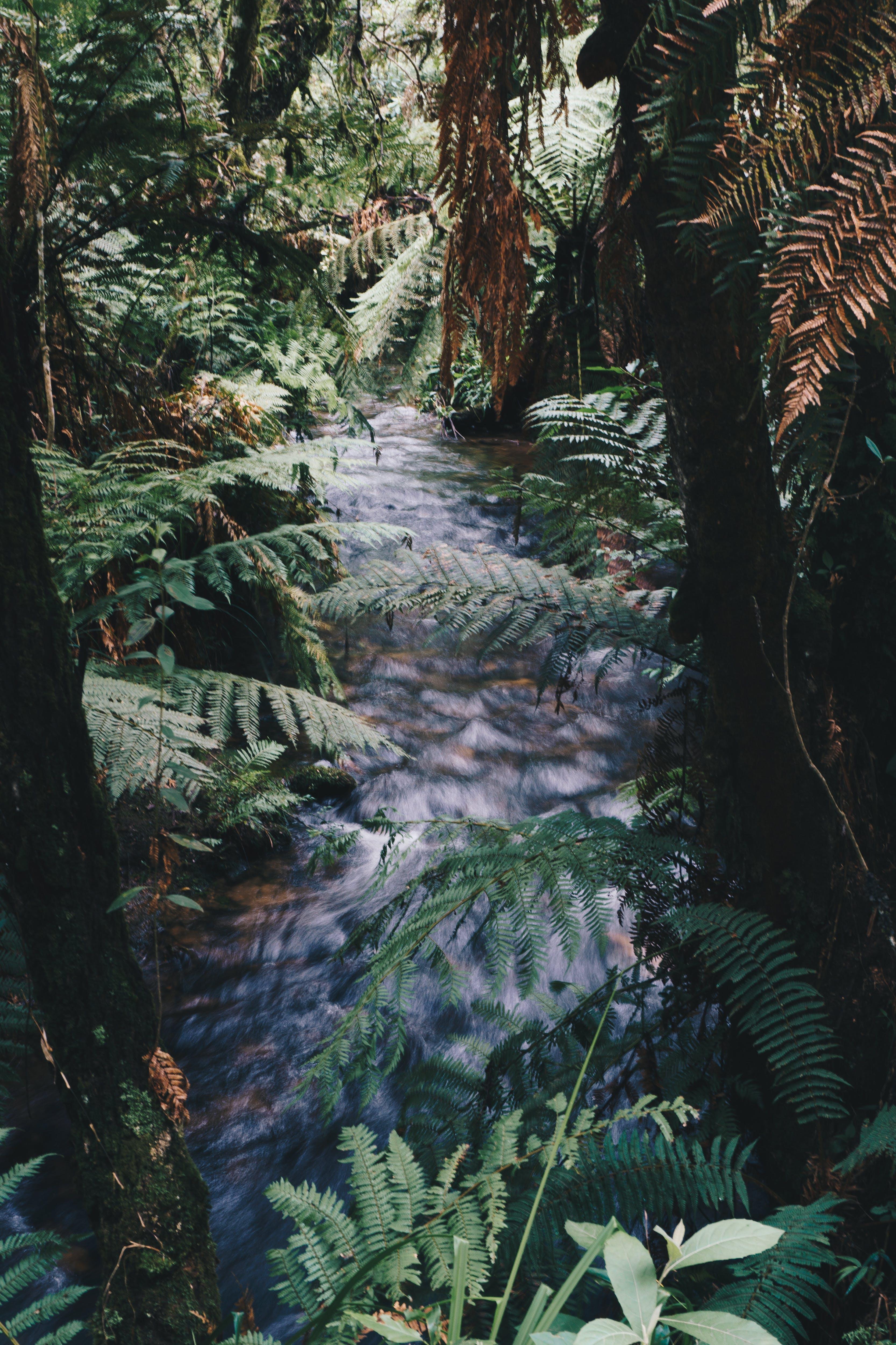 Kostenloses Stock Foto zu bäume, farn, fließen, friedlich