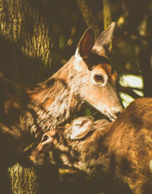 Immagine gratuita di animale, bambino, barbaro
