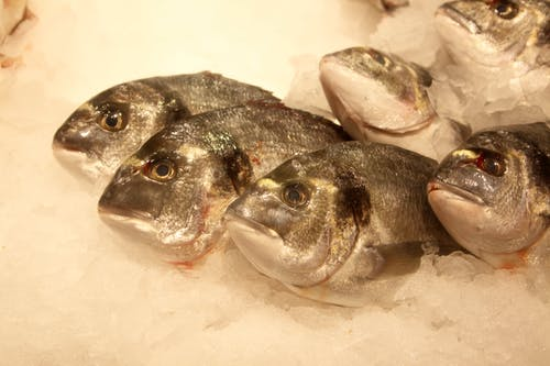 Free stock photo of fish market