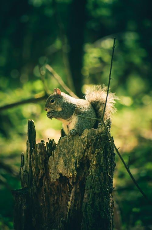 Immagine gratuita di albero, animale, autunno