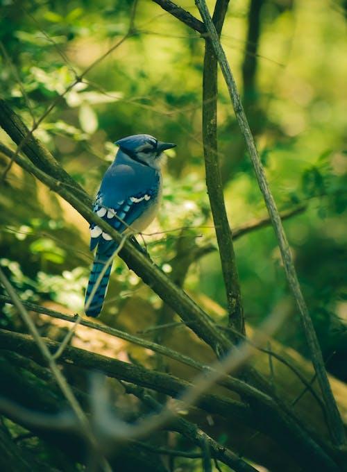 Immagine gratuita di albero, animale, bellissimo