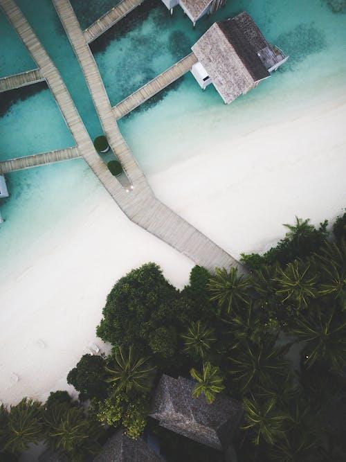 度假村, 從上面, 日光, 樹木 的 免费素材照片