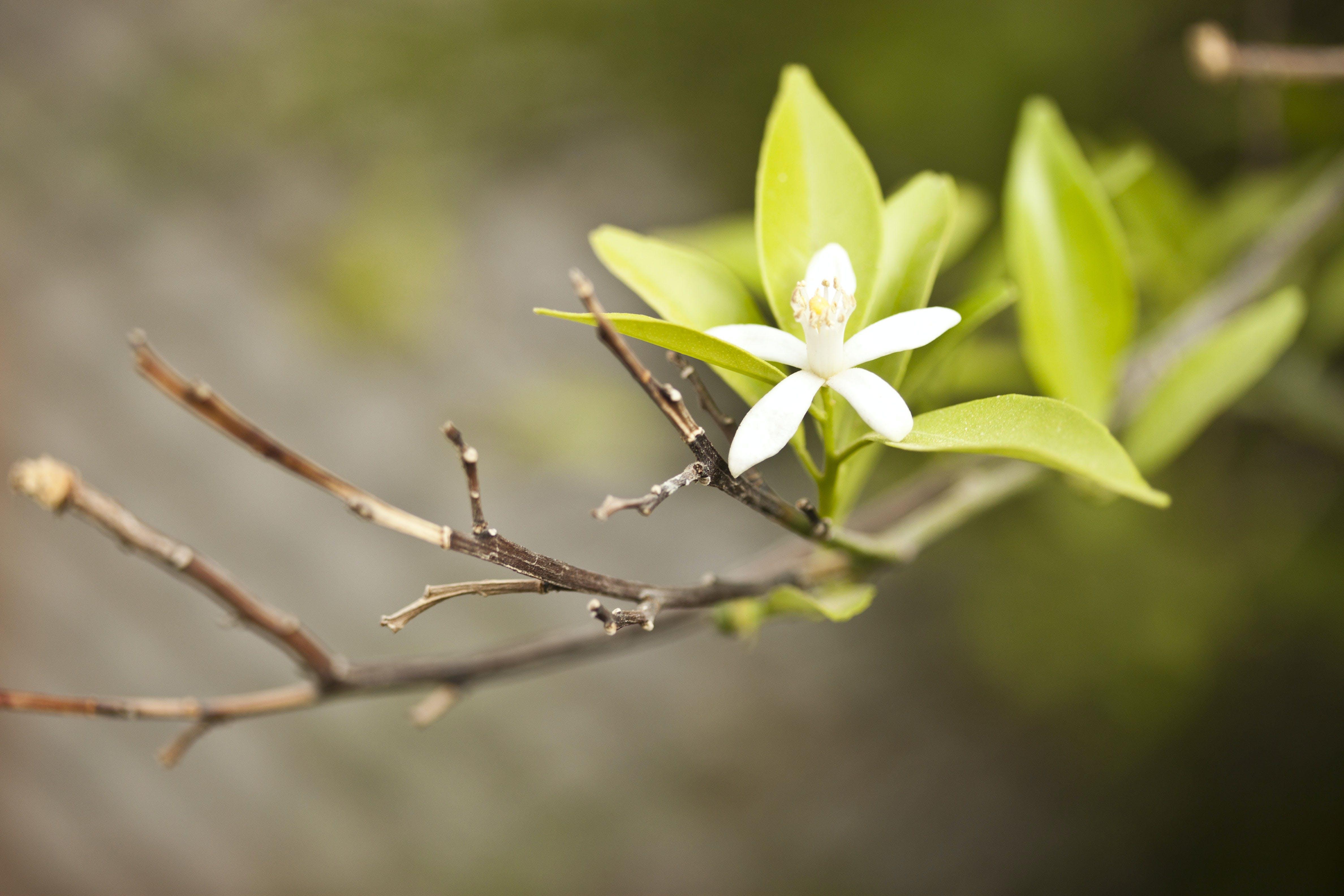 Ảnh lưu trữ miễn phí về dof, hệ thực vật, sự phát triển