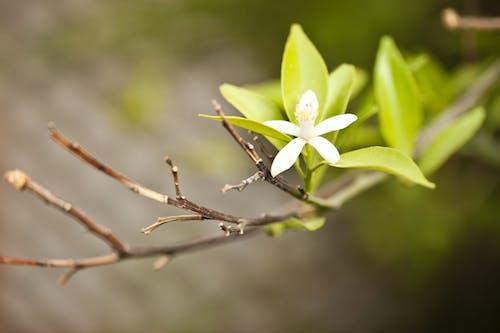Ilmainen kuvapankkikuva tunnisteilla kasvikunta, kasvu, kukinta, kukka