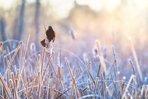 Red and Black Bird on Brown Grass