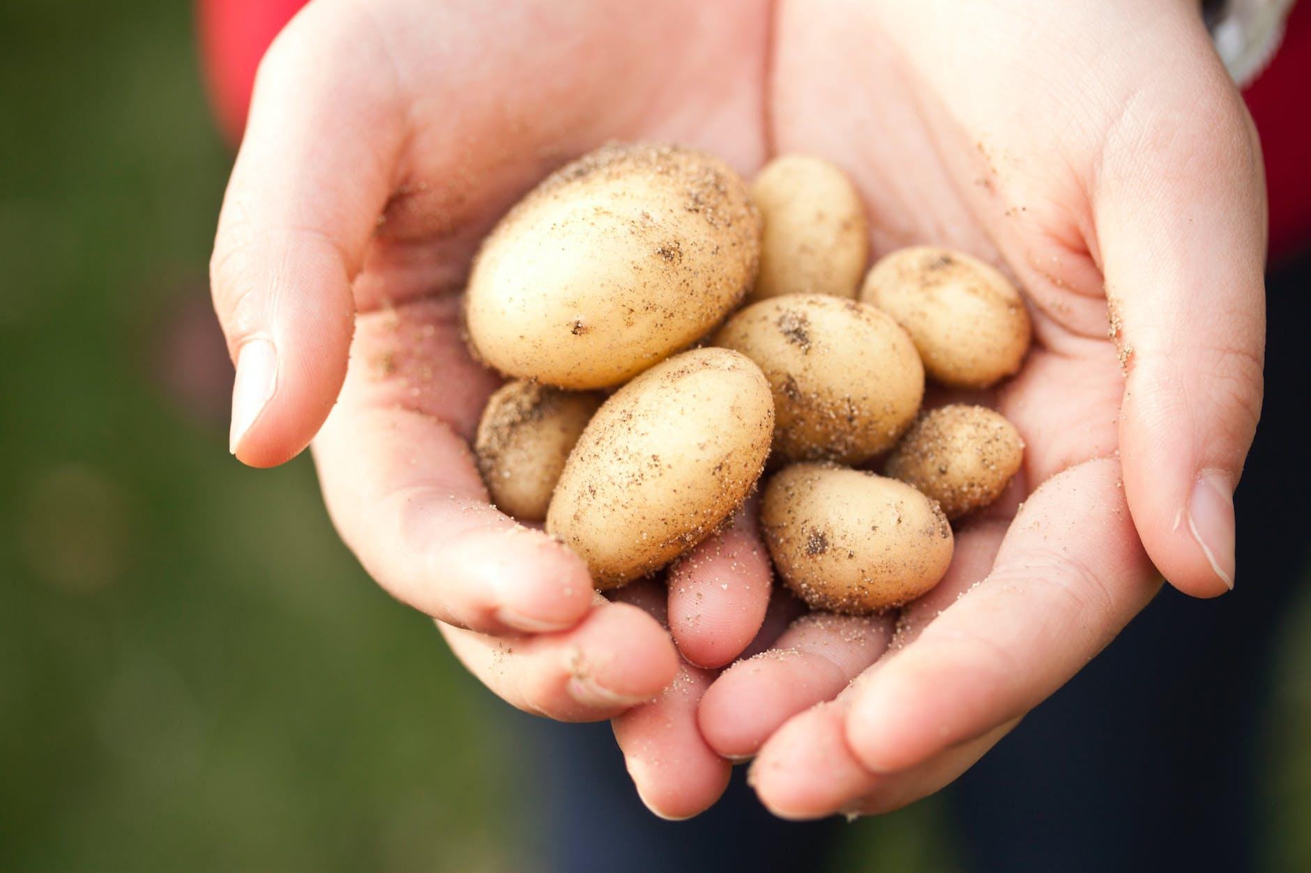 9 formas de cultivar tu propia comida. Cultiva tus propias papas.