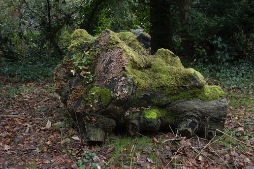 Brown Tree Log Filled With Moss on Withered Leaf Field