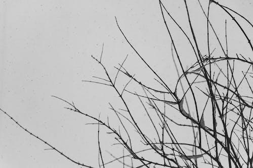 Kostenloses Stock Foto zu schnee, winter
