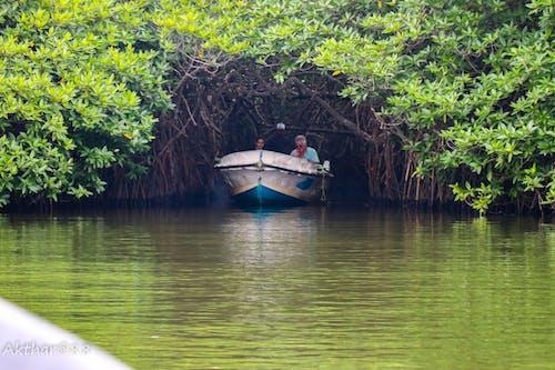 Foto stok gratis safari sungai