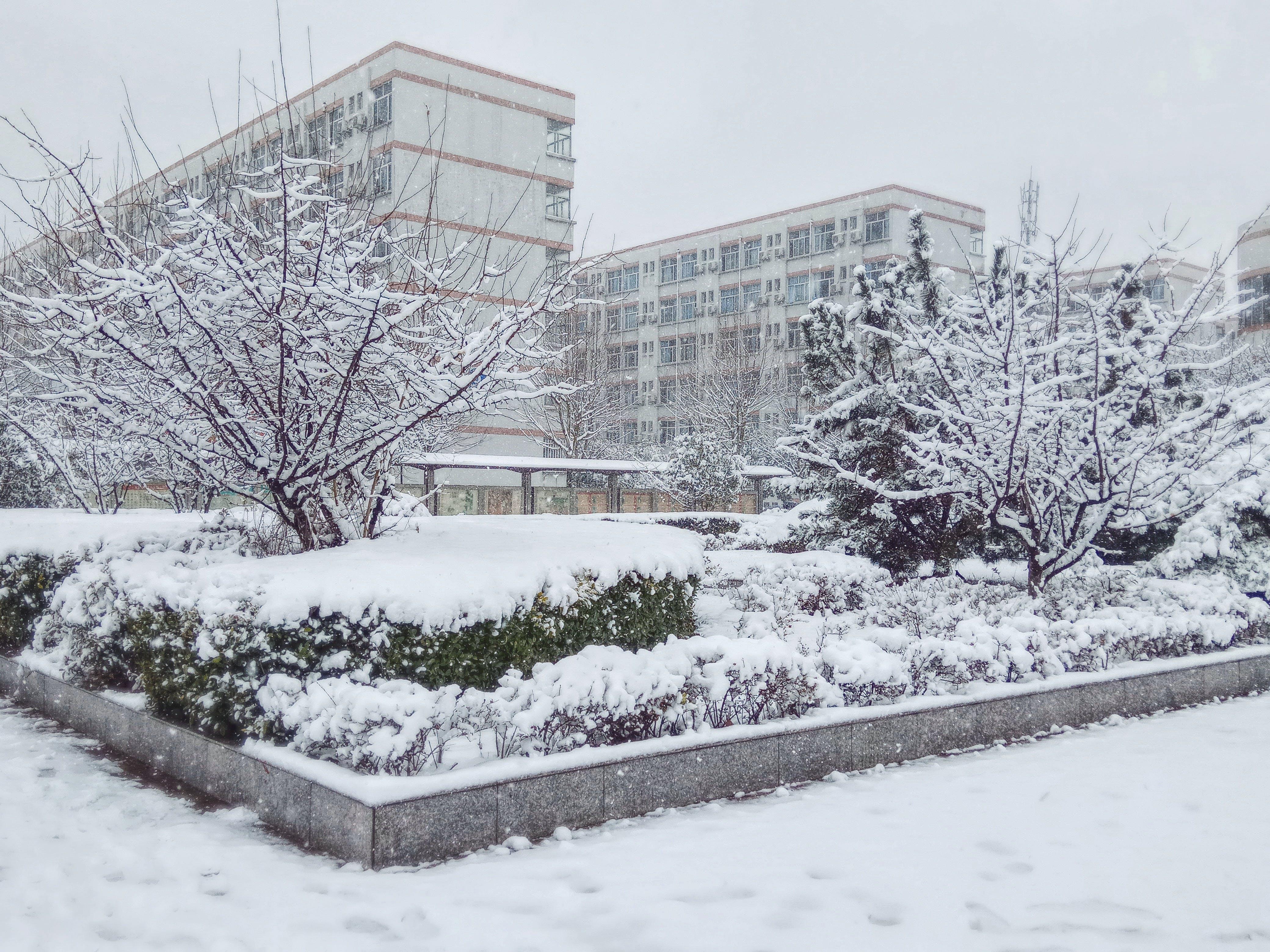 arbre de neu