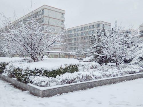 Gratis lagerfoto af sne træ