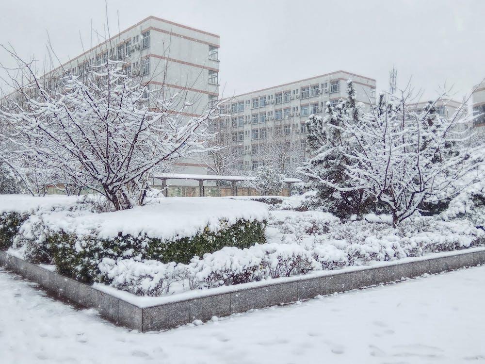 Free stock photo of snow tree