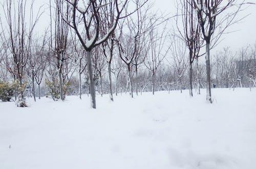 kar ağacı içeren Ücretsiz stok fotoğraf