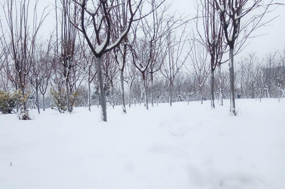 Fotos de stock gratuitas de árbol de nieve