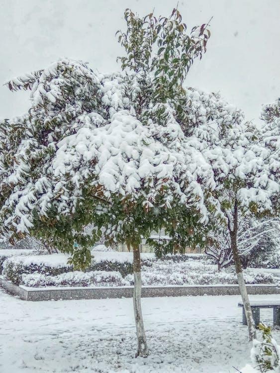 Foto d'estoc gratuïta de arbre de neu