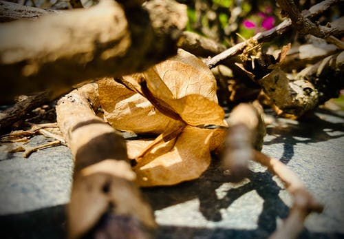 Free stock photo of brown leaves, dried leaf, nature