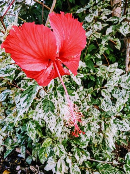 Immagine gratuita di bellissimo, bocciolo, botanico, colori