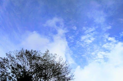 Gratis lagerfoto af blå himmel