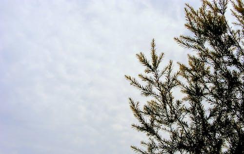 Gratis lagerfoto af blade, dagslys, grene, miljø
