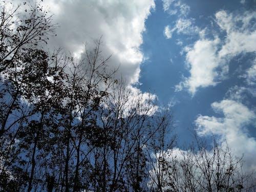 Gratis lagerfoto af gummitræ