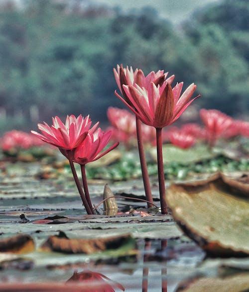 Fotos de stock gratuitas de cabeza de flor, de archivo fotos, de cerca