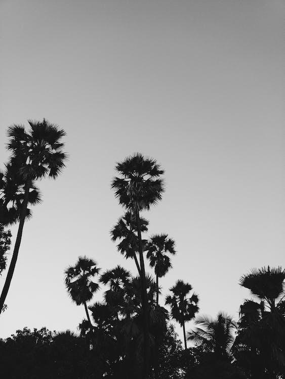 低角度攝影, 天性, 天空