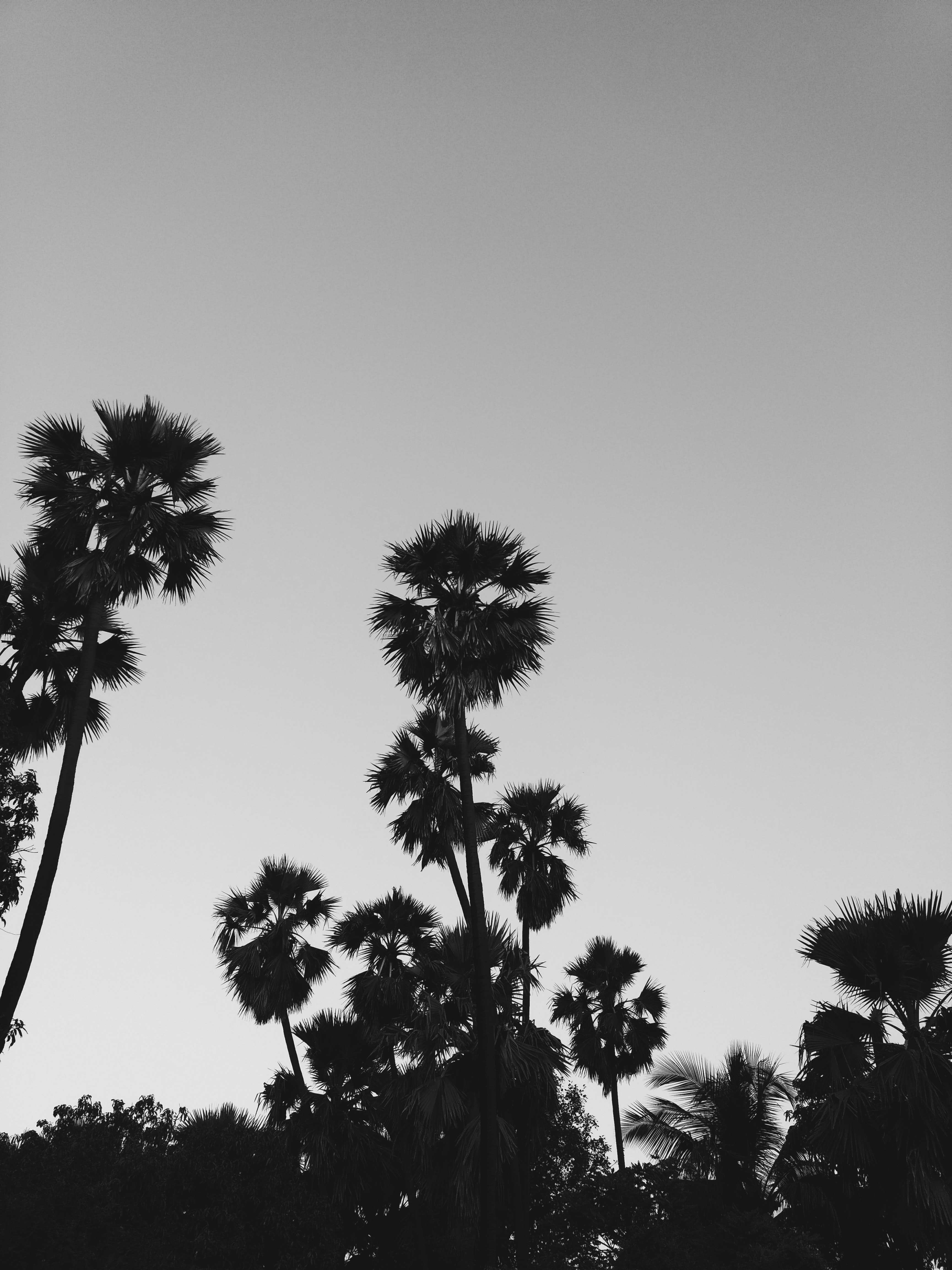 Eos Palm Desert >> Free stock photo of black-and-white, fingers, hands