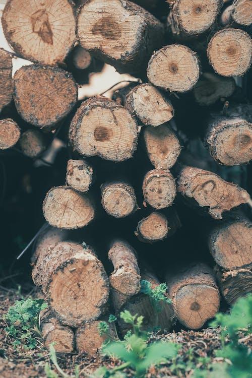 Základová fotografie zdarma na téma dřevěný, dřevo, flóra