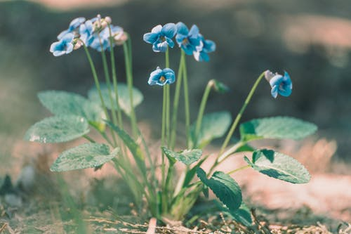 Základová fotografie zdarma na téma barva, divoký, flóra