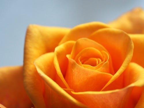 Gratis lagerfoto af blomst, blomst tapet, blomstrende, close-up