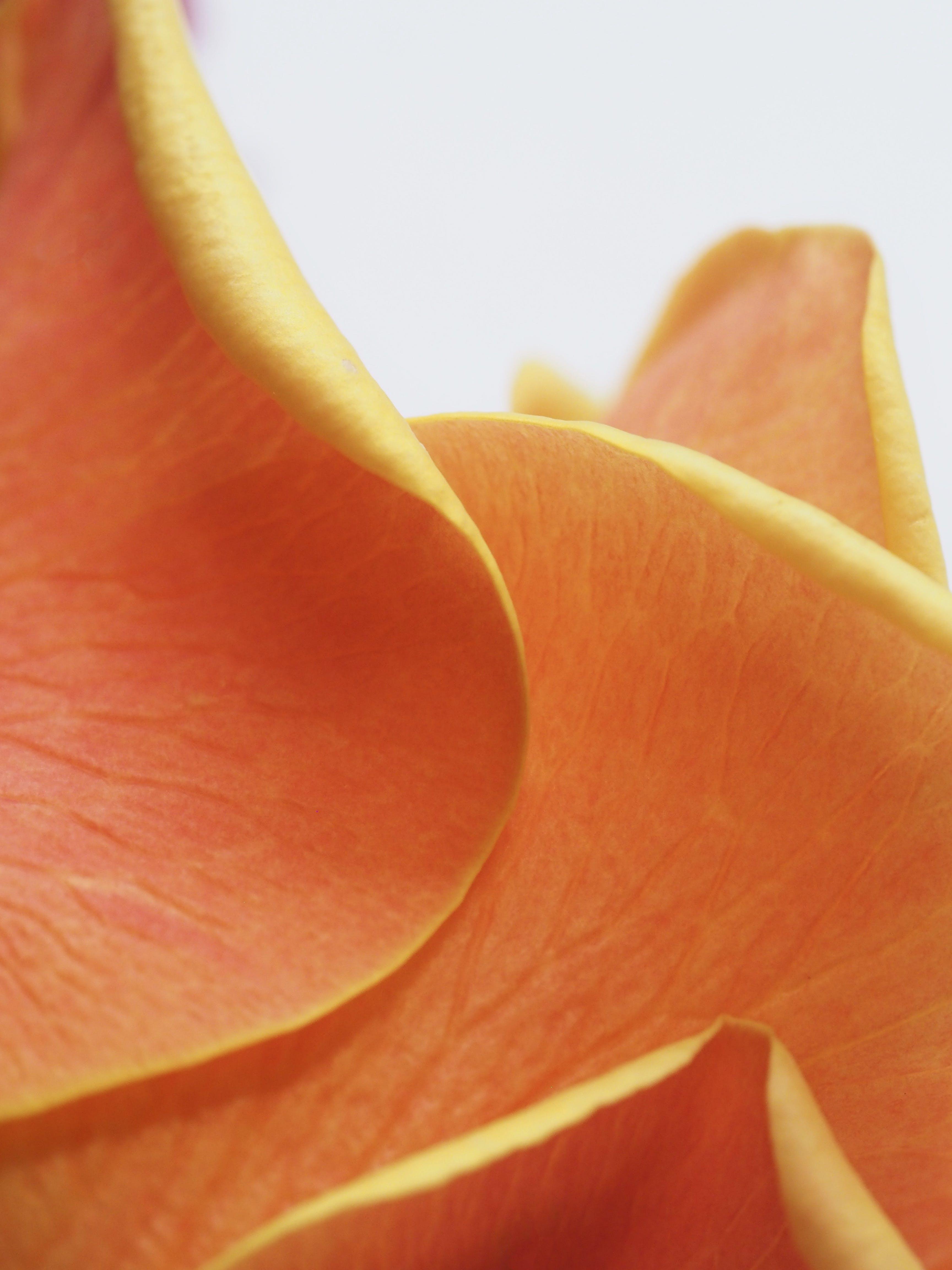 Orange Flower Petal