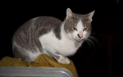 Darmowe zdjęcie z galerii z kocur, kot, kot w nocy, noc