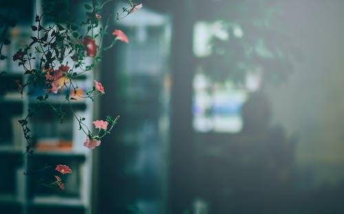 Photos gratuites de centrale, fleurir, fleurs, flore