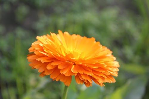 Základová fotografie zdarma na téma slunečnice