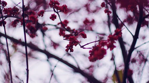 Foto profissional grátis de árvore, aumento, borrão, brilhante