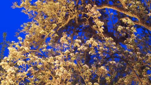 Fotobanka sbezplatnými fotkami na tému strom