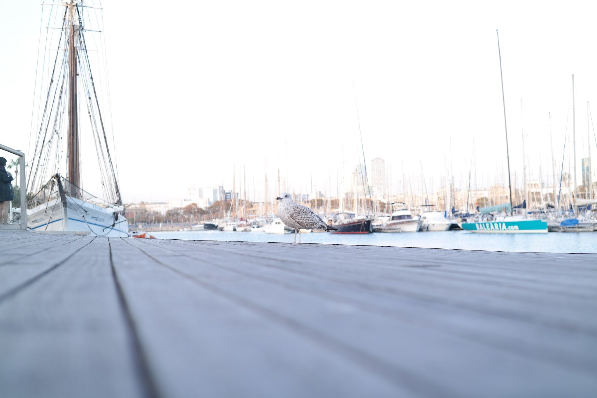 gull, harbour, sailing ships